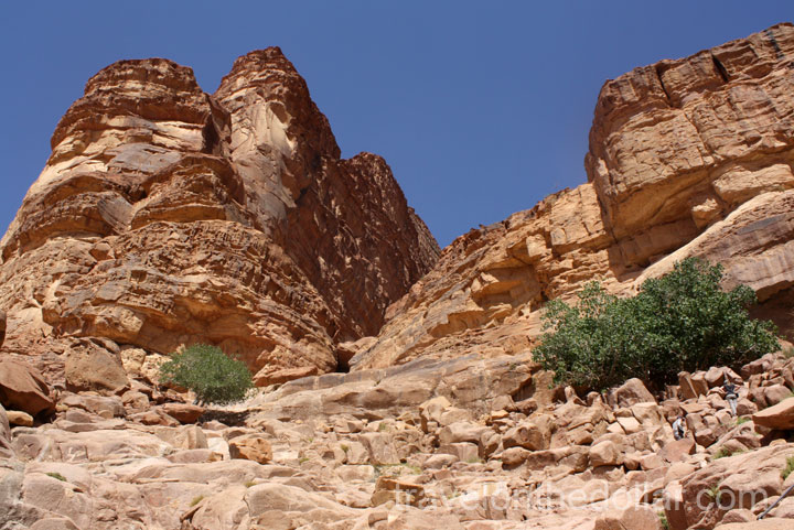 Fig tree up on Lawrence Spring at Wadi Rum