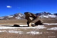 Flower Rock, Salar de Uyuni, Bolivia