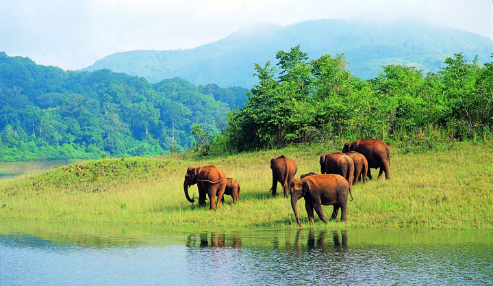 Wildlife sanctuaries' financial status demands more visitors