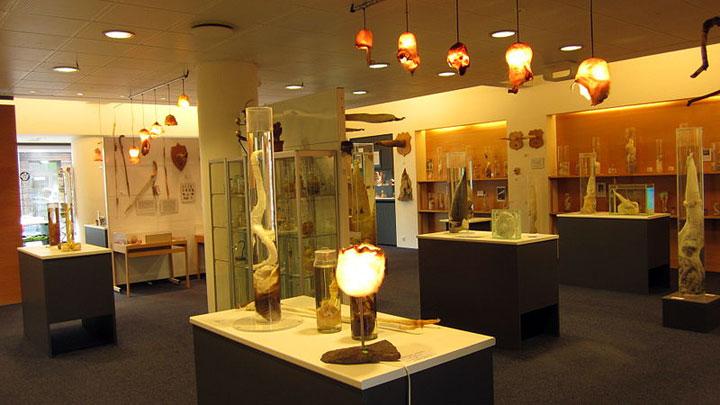 phallologicalmuseum3