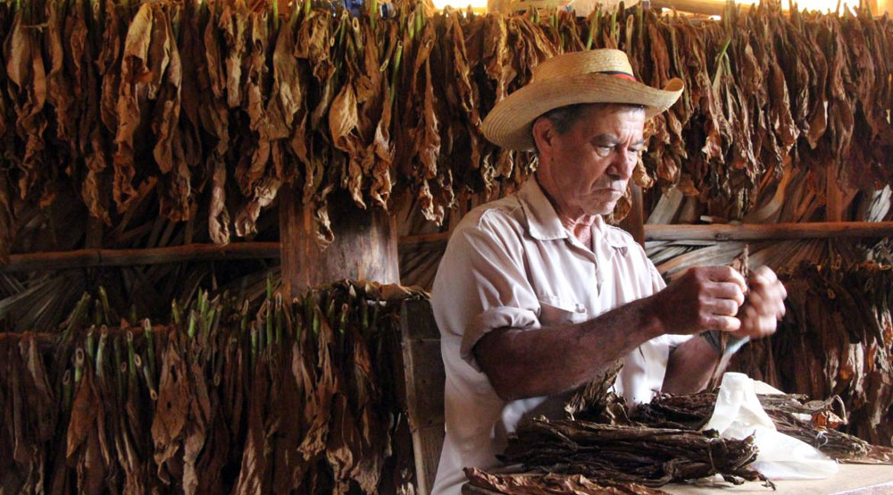 Cigar making in Cuba