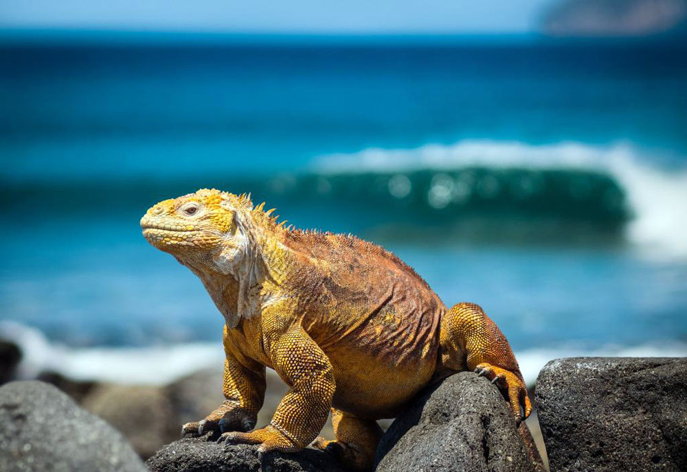 Galapagos Islands - Top Destinations for Beach and Sea Lovers