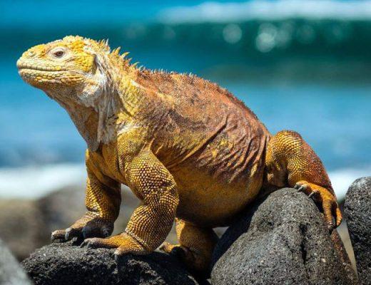 World's Top 9 Wildlife Destinations