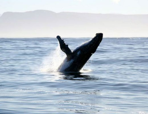 Top 7 Whale-Watching Destinations in the World
